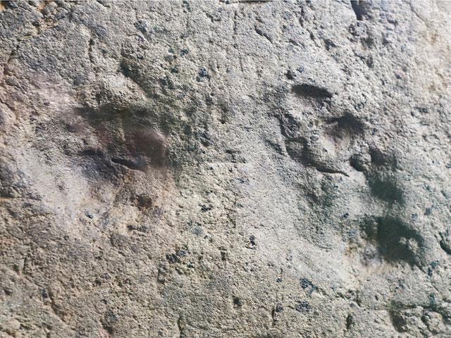В Саудовской Аравии обнаружены отпечатки ступней, оставленные 85.000 лет назад   (иллюстрация)