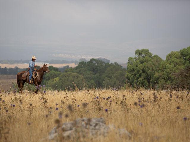 Израильские ковбои на Голанах
