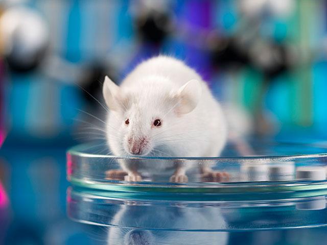 Ученым удалось удалить ВИЧ из ДНК мышей