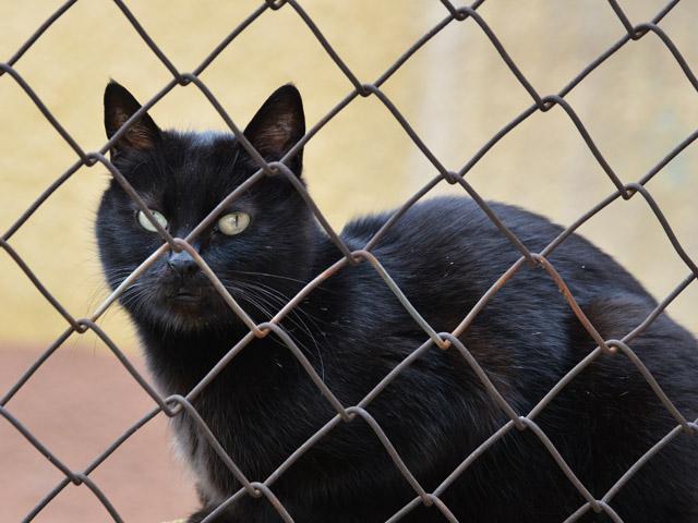 В Татарстане задержали кошку-наркокурьера