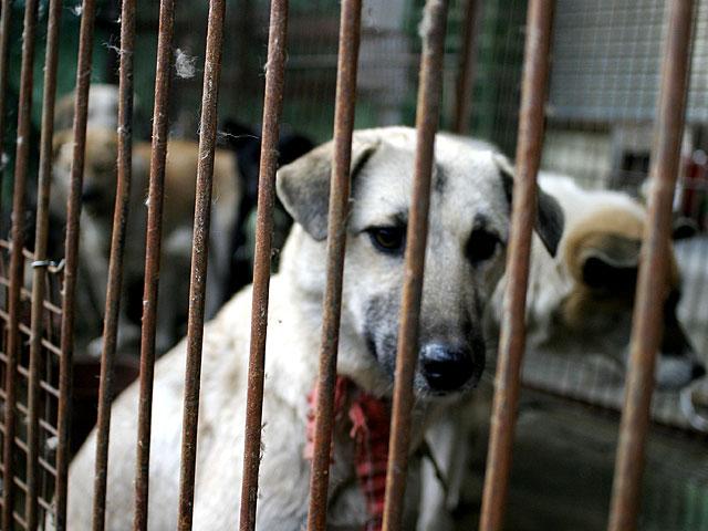 Китай намерен исключить собак из категории скота и съедобных животных