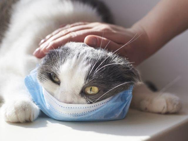 Ученые: коронавирус опасен для кошек, но его  могут не бояться собаки
