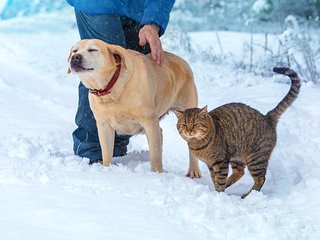 Кошки скорее были спутниками человека, а не домашними животными