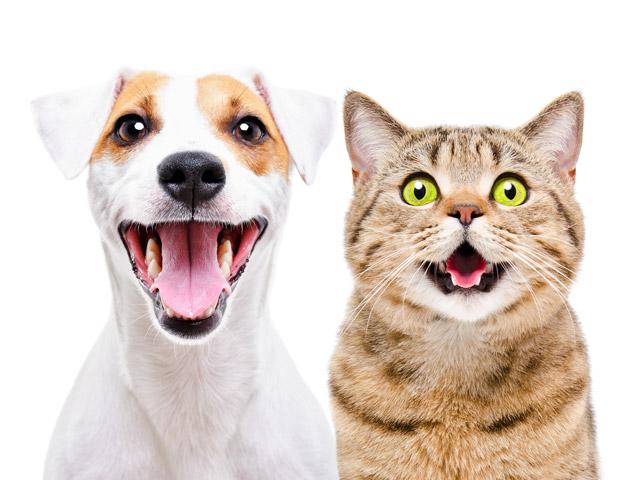 11% читателей NEWSru.co.il за время коронавирусного кризиса завели домашних животных. Итоги опроса