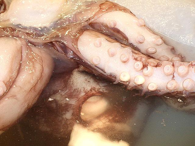 Порно с кальмаром онлайн