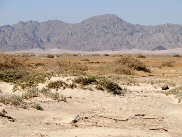 Синайские бедуины: не дадим Израилю оккупировать восток полуострова