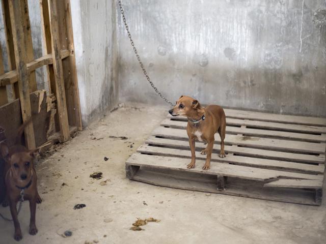 Правительство ХАМАС в Газе запретило выгул собак