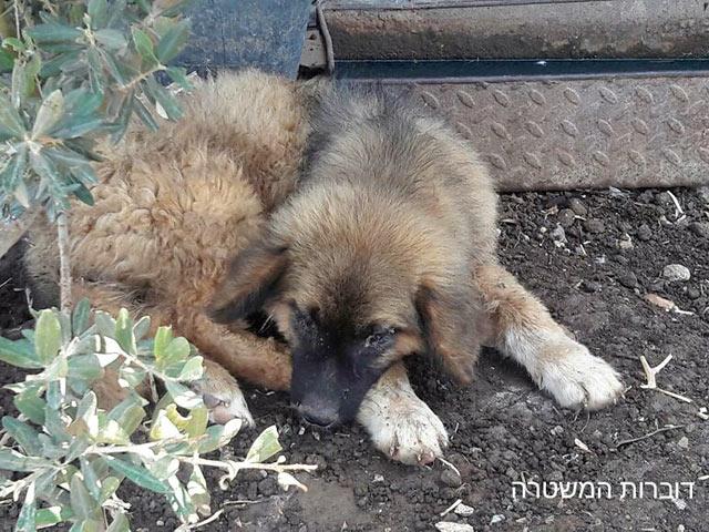 В деревне Аабалин обнаружены животные, подвергающиеся издевательствам