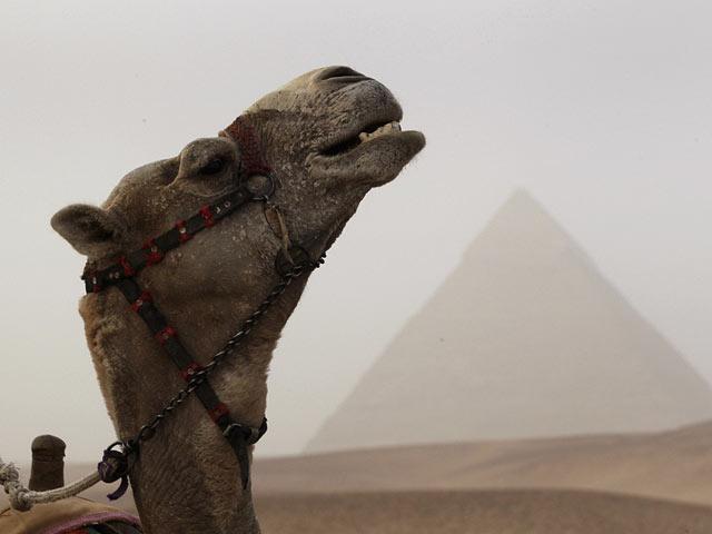 Начато обустройство плато Гизы, верблюдов у пирамид заменят электромобили
