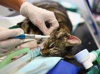 В Эйлате ведется операция по спасению кошечки, которую едва не убил посетитель пиццерии