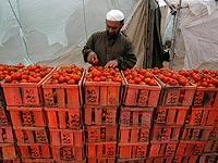Израиль снял запрет на поставку сельхозпродукции из Палестинской автономии в обмен на отмену бойкота израильских скотоводов