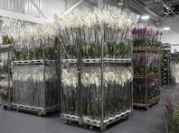 Полиция оштрафовала владельца цветочного магазина за рассылку цветов в нарушение постановлений