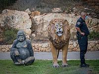"""Комиссия по законодательству разрешила открыть для посетителей зоопарки и """"Сафари"""""""