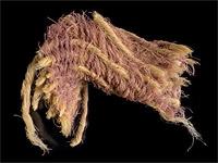 Одежда с царского плеча: археологи нашли пурпурную ткань времен Первого Храма
