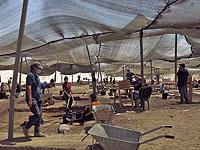 Редчайшая находка израильских археологов: куриное яйцо, которому тысяча лет