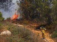 Лесной пожар около поселка Шореш, 3 августа 2021 года