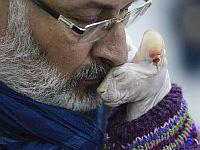 """""""Шнобелевские премии 2021"""": от способов общения с кошками до ответа на вопрос """"зачем мужчинам борода"""""""
