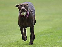 Чемпионат Боснии и Герцеговины. Собака поиграла в футбол