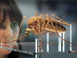 Минздравом зафиксирована вспышка малярии в Израиле