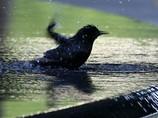 В Ашхабаде установлен мировой рекорд по фонтанам