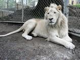 В Австралии недорого продается бутик-зоопарк вместе с животными