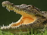 Австралия: немецкие туристы застряли посреди ручья, кишащего кровожадными крокодилами