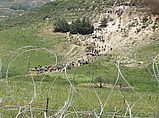 Демонстранты на сирийско-израильской границе. 5 июня 2011 года