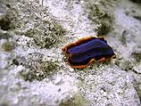 """Британские зоологи обнаружили """"ген бессмертия"""" у плоского червя"""