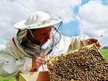 Бдительные пчеловоды также обратили внимание на то, что левая ноздря птицы значительно больше правой