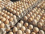 Миллионы контрабандных яиц поступили из ПА в израильские магазины