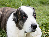 Собака погибла, спасая хозяина-самоубийцу