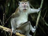 В Иране завершена подготовка к запуску в космос обезьяны