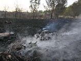 Лесной пожар в районе Бейт-Шемеша: эвакуированы жители поселка Роглит