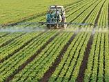 Минсельхоз запретит использование 75 ядохимикатов при выращивании овощей и фруктов