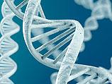 Калифорнийские ученые: за счастье в браке отвечает ДНК