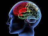 Американские ученые: нищенская жизнь негативно влияет на структуру мозга