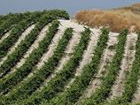 Сельскохозяйственные угодья на засушливой почве в Израиле