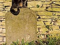 В США в возрасте 27 лет умерла самая старая кошка в мире