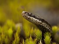 Жительница Голанских высот скончалась от укуса змеи
