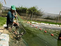 На границе с Газой египтяне создают систему рыбного хозяйства для борьбы с туннелями