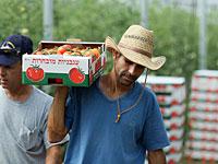 Минсельхоз заплатит фермерам за сбор невыгодного урожая, чтобы передать его бедным