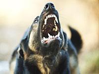 Владелец пса, покусавшего чужую собаку, приговорен к 3 месяцам тюрьмы и штрафу