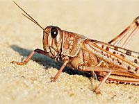 Продукты из насекомых богаты белками